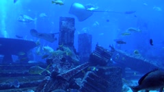 Big blue marine life Stock Footage
