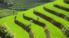 Workers Planting Rice in Scenic Rice Terraces - Northern Mountains Sapa Vietnam Stock Footage