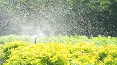 Sprinkler head watering in the garden, full HD. Stock Footage