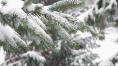 Spruce branch with snow Stock Footage