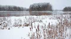 Dry reed cowered with snow on the lakeshore at winter season - stock footage