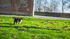 Stray cat in park finding a person for patting Stock Footage