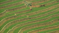 Time Lapse - Zoom Out of Scenic Rice Terraces in Sapa Northern Vietnam Stock Footage