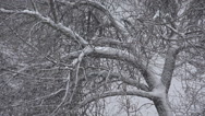 Stock Video Footage of Snowing, Snow Fall on Tree Foliage, Christmas Scene, Winter View in Forest, Wood