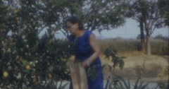 Old Lady Picking Oranges from Tree California 60s 16mm Stock Footage