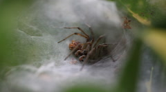 Spider and a Meal Stock Footage