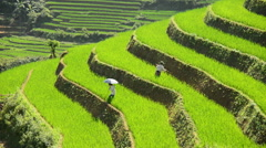 Time Lapse - Workers Planting Rice in Scenic Rice Terraces - Sapa Vietnam Stock Footage