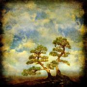 Two pines on vintage sky background. - stock illustration