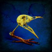 Skull of bird on single paw. Idea of genetic mutation. Stock Illustration