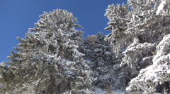 HD. View with blue sky and trees covered by snow. Winter season.  - stock footage