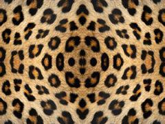 Leopard fur pattern Stock Illustration