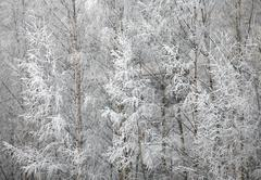 Trees covered with hoarfrost Stock Photos