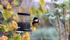 Sunflower seeds for birds,winter,  tit, chickadee Stock Footage