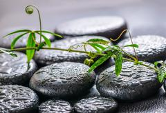 beautiful spa concept of green twig passionflower with tendril on zen basalt  - stock photo