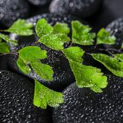 beautiful spa concept of green twig adiantum fern on zen basalt stones with d - stock photo