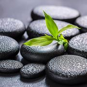 beautiful spa concept of green branch bamboo on zen basalt stones with drops, - stock photo