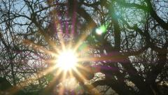 Sun Flare Behind Branches Stock Footage