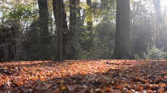 Quite sunny day in the autumn forest Stock Footage
