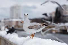 seagull looking curiosity - stock photo