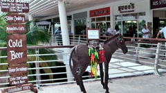Mexico San Miguel de Cozumel Caribbean Sea 009 Punta Langosta shopping center Stock Footage