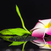 beautiful spa still life of green branch bamboo, plumeria flower with drops o - stock photo