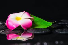 spa concept of plumeria flower, green leaf kalla with drops on zen basalt sto - stock photo