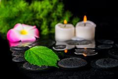 beautiful spa concept of green leaf hibiscus, plumeria with drops and candles - stock photo