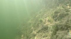 Underwater Florida Keys Free diving Stock Footage
