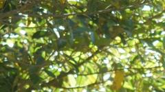 Quetzal Tilt up - stock footage