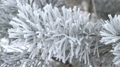 Fir tree covered by ice in winter Stock Footage
