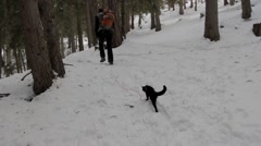 A walk with a black cat - stock footage