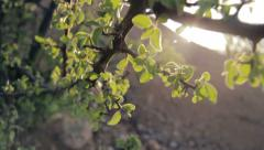Detail tracking of bush branch in wind, shallow depth of field Stock Footage
