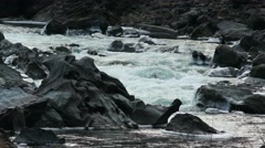 4K UHD Iced Black Rocks in a Mountain River Stock Footage