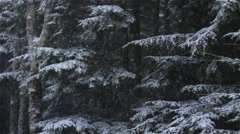 Stock Video Footage of Light and Gentle Snow Falling dreamy on Alaskan Forest Scape