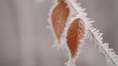 Leaves in Hoarfrost - stock footage