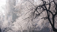 Hoarfrost on a Trees - stock footage