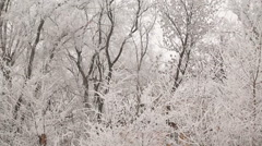 Hoarfrost on a Trees Stock Footage