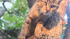 Cats climb trees Stock Footage