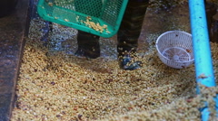 Coffee bean raw plantation Stock Footage