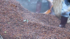 Make fertilizer from bark coffee bean Stock Footage