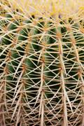 Stock Photo of closeup green cactus with needles pattern for background