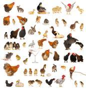 Animals against white background Stock Photos