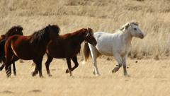 Stock Footage Herd of Young Horses Running in the Steppe Slow Motion Stock Footage
