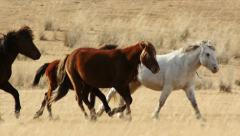 Stock Footage Horses Galloping Across the Steppe Slow Motion Stock Footage