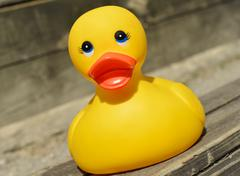 Small yellow plastic duck Stock Photos