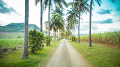 Long road in mauritius with palm trees Stock Footage