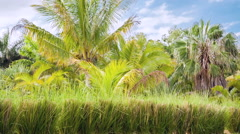 Tropical nature background Stock Footage