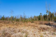 Beautiful forest meadow at fresh sunny day Stock Photos
