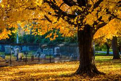 Autumn colors on a tree at the gettysburg national cemetary, pennsylvania. Stock Photos