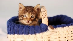 Kitten sitting in a basket and looking at something out of frame Stock Footage